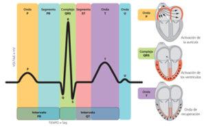 Qué es un electrocardiograma: cómo leerlo