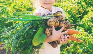 Alimentos ecologicos y biologicos Biologicos y ecologicos