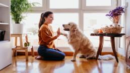 Tener un perro como mascota beneficios para nuestra salud