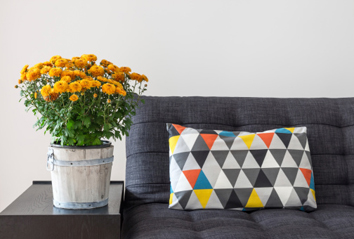 Plantas de interior para purificar el aire de tu hogar. Crisantemo