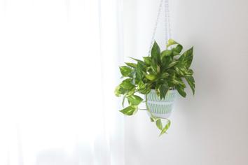 Plantas de interior para purificar el aire de tu hogar. Poto